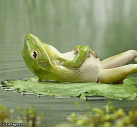 Meditation: a frog using meditation as a relaxation technique