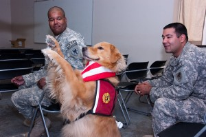 Animal Assisted Therapy Dogs Work with PTSD Veterans