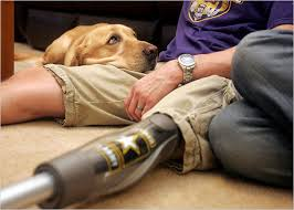Animal assisted therapy with veterans