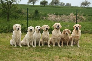 Dogs trainingn for Animal Assisted Therapy waiting for play time