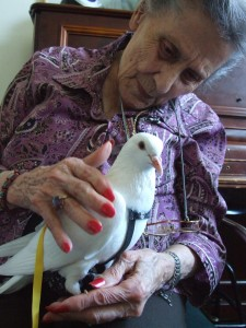 Animal assisted therapy with pigeon