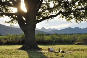 Picnic under an oak tree - art de vivre